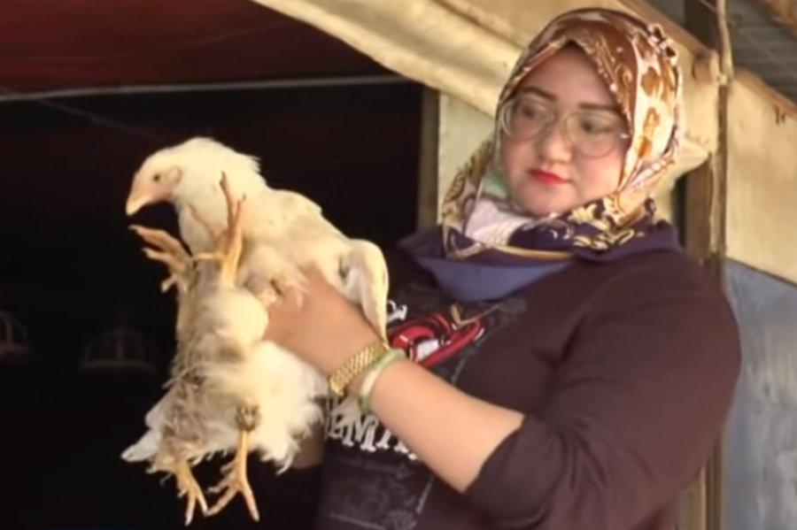 Four-legged Maran chicken loves to eat and sleep [VIDEO]