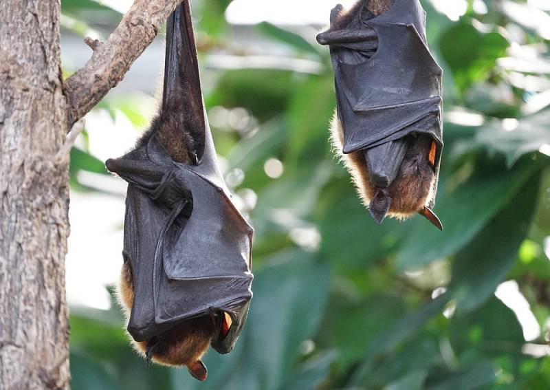 Coronavirus: Bat scientist's cave exploits offer hope to beat virus 'sneakier than SARS'