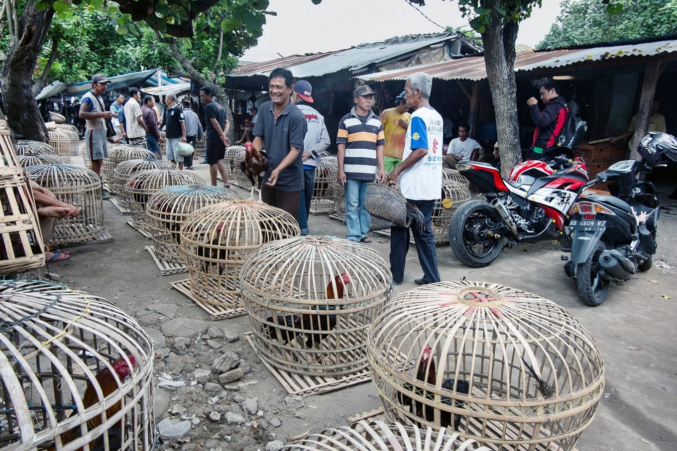 Police foil transnational rooster-smuggling operation in North Sulawesi