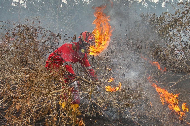 Riau issues emergency alert for wildfires as dry season begins