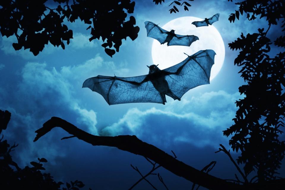 """除了蝙蝠,这8种""""野味""""万万不要碰,为了您的健康,请管住嘴!"""
