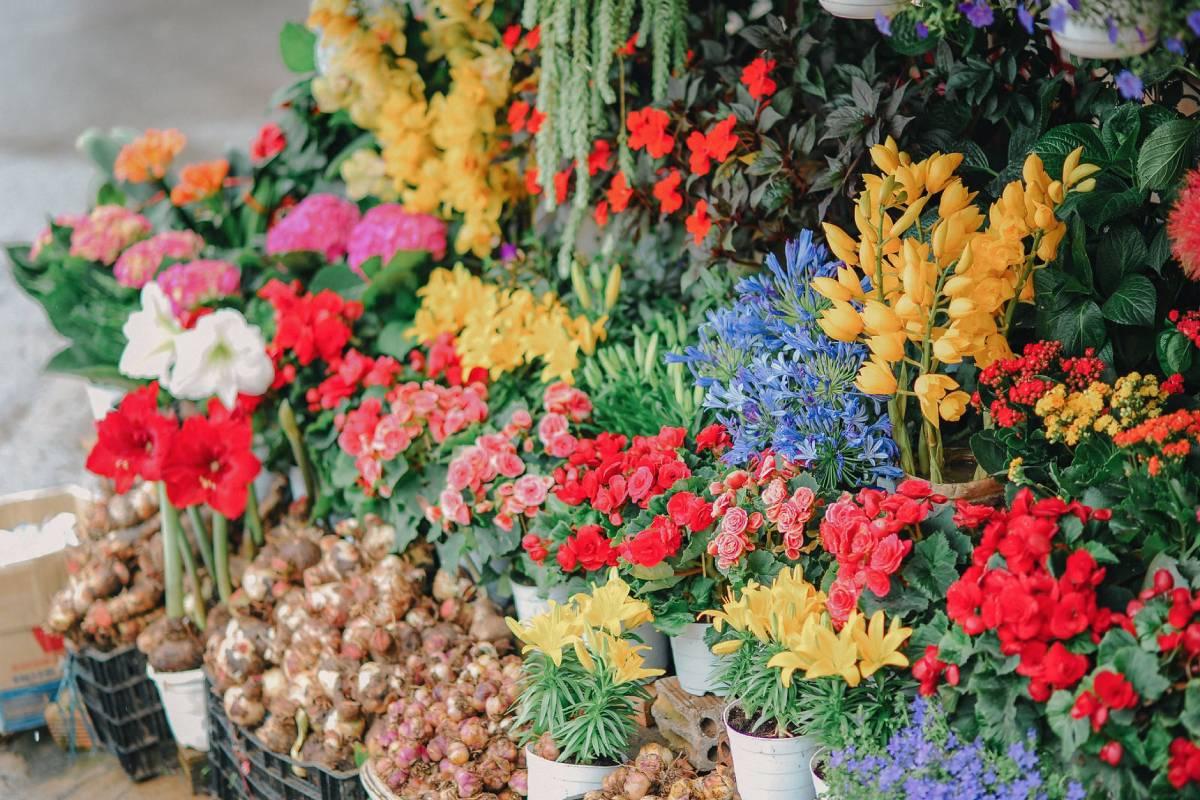 Say it with sanitiser: Beijing florist takes on coronavirus for Valentine's Day