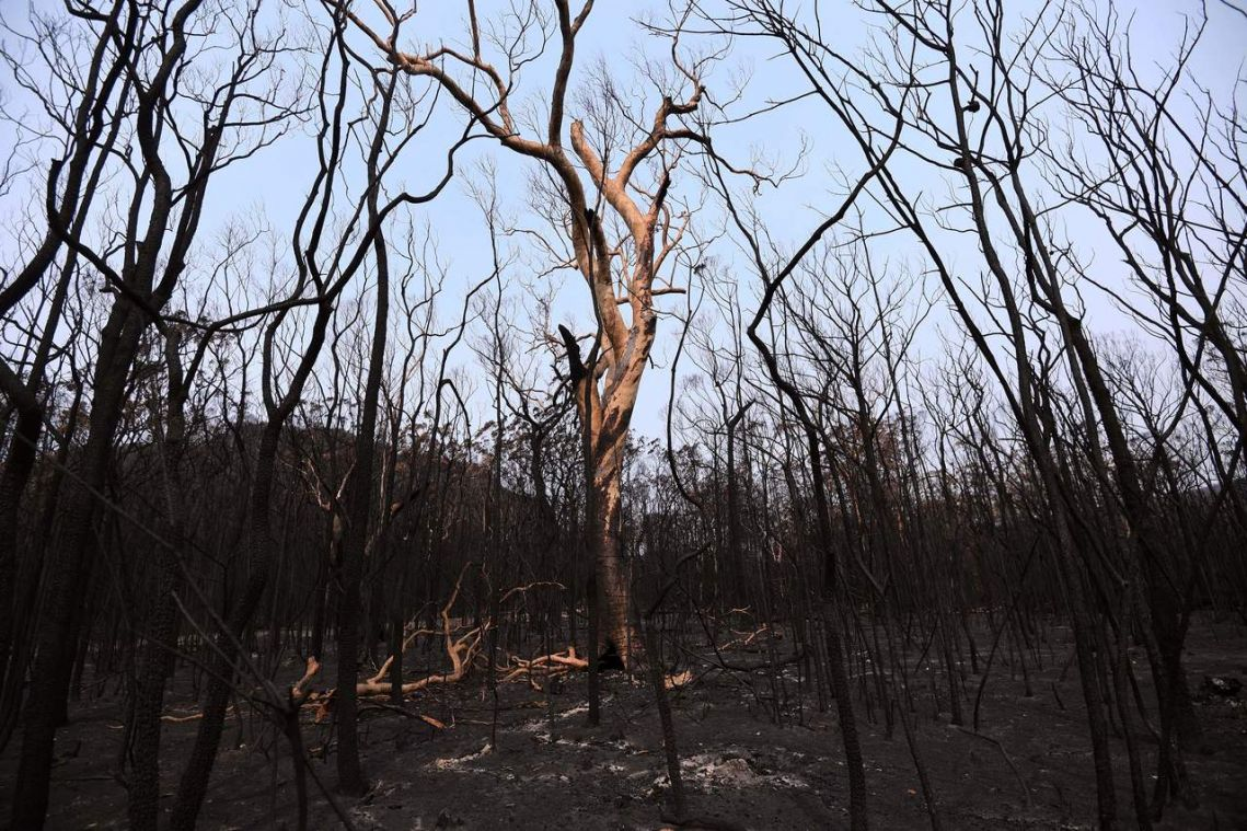Australian bush fires extinguished, but climate rows rage on