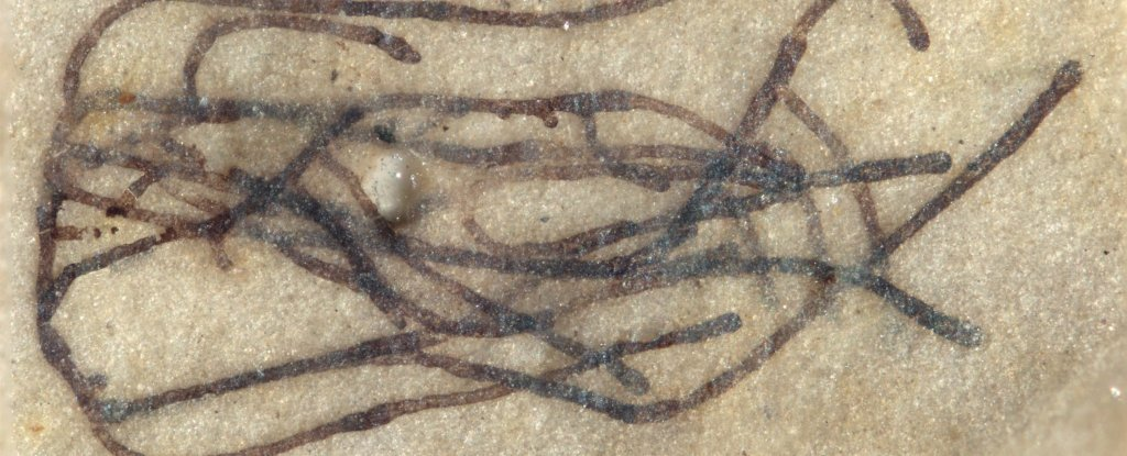 Look at These Mind-Blowing Fossils of 1 Billion-Year-Old Seaweed