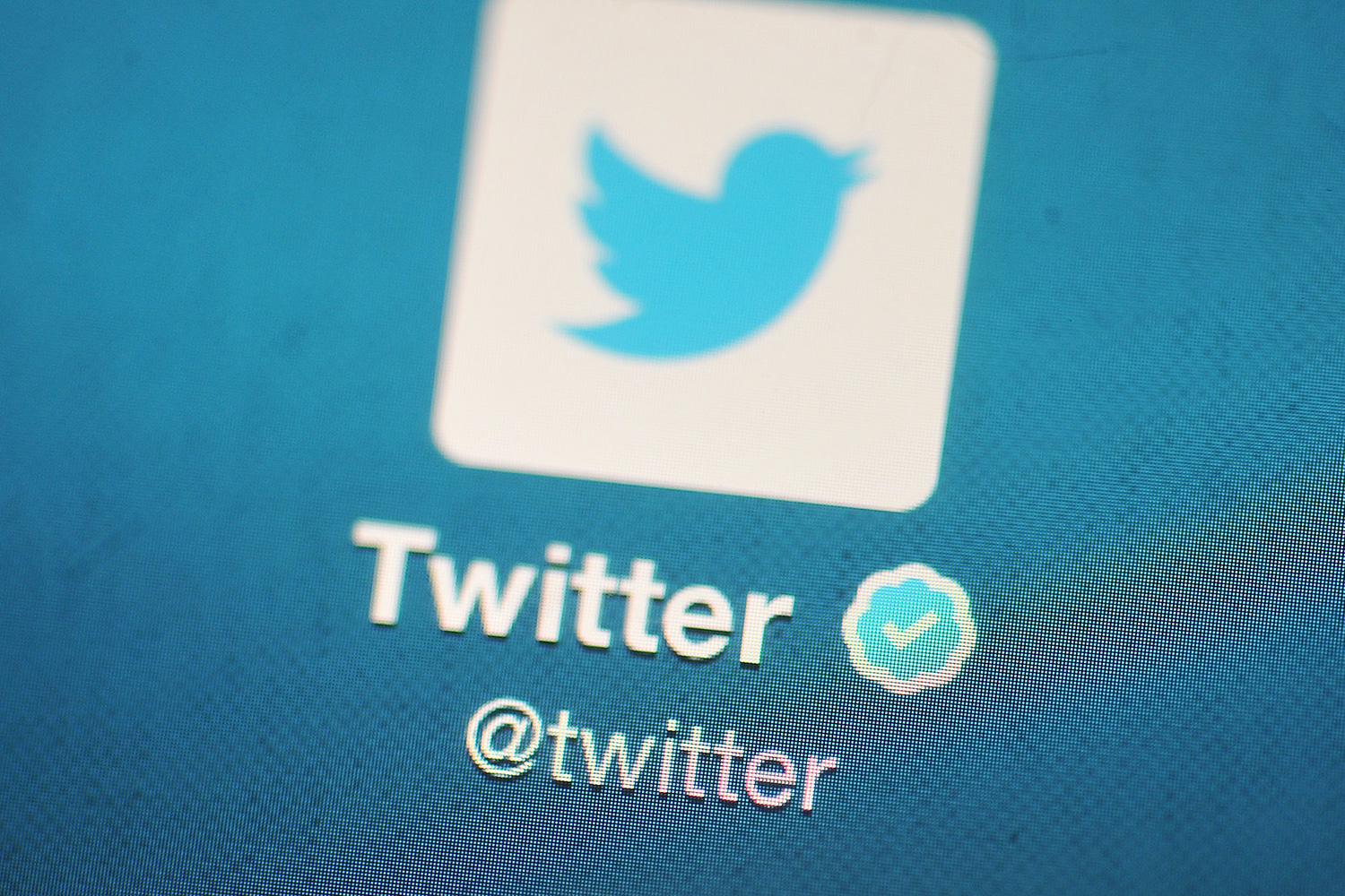 Twitter Verified a Teenager's Account for a Made-Up Politician