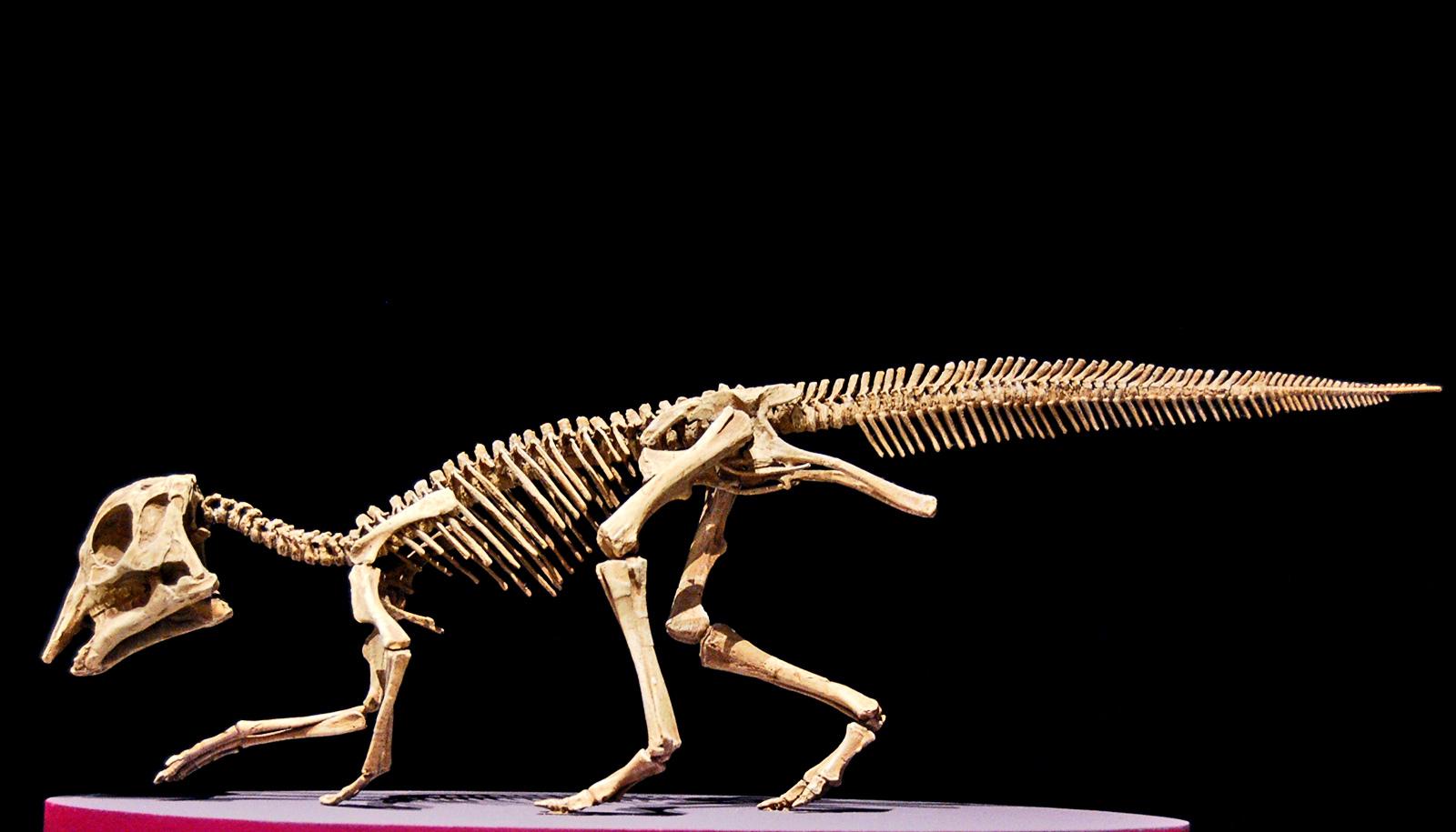 DNA fragments may persist in baby dinosaur cartilage