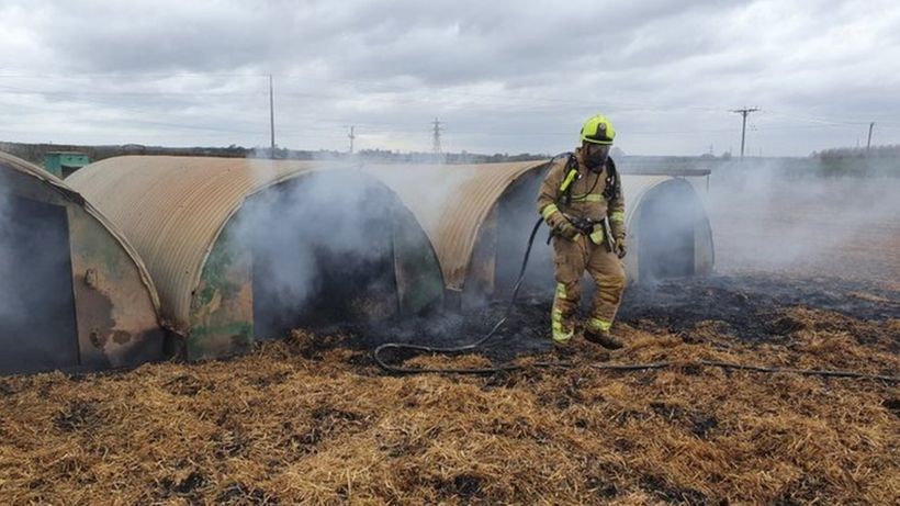 Bacon saved after pedometer-eating pig's poo starts farm fire