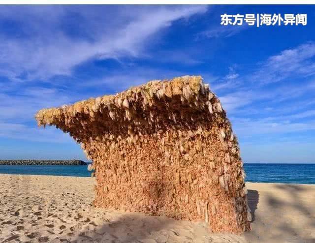 澳洲沙滩上一特殊遮阳墙,建筑材料尤为特殊,游客都不敢在墙下待