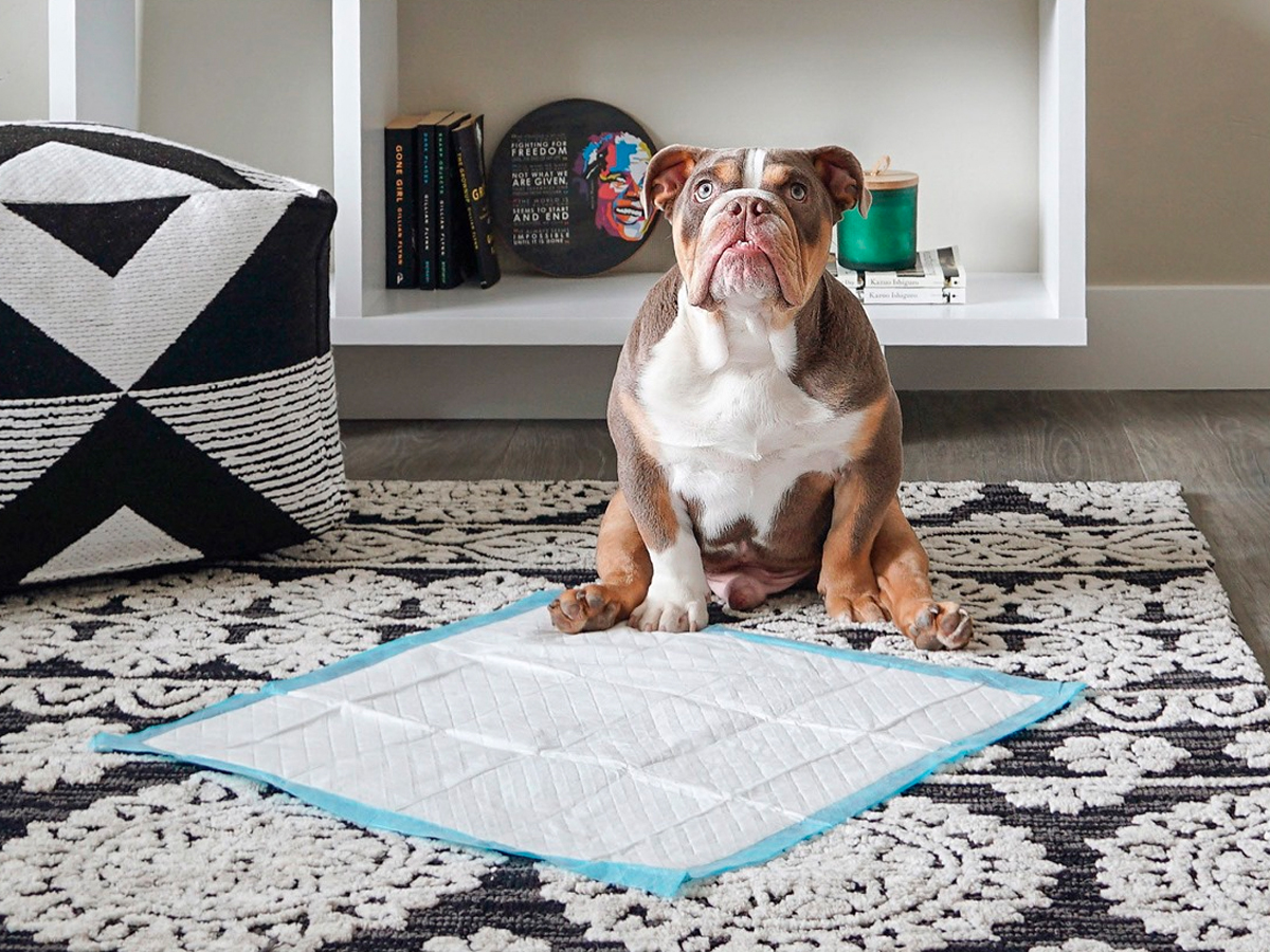 How to potty train a puppy and the supplies you need to do it, according to a professional dog trainer