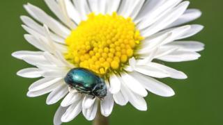 Top ten garden pests and diseases revealed