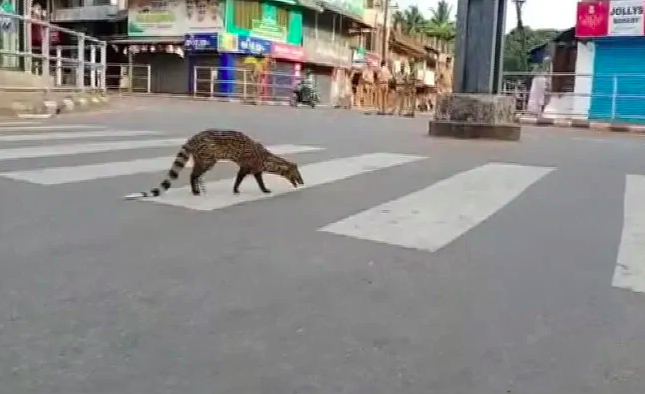 THIS critically endangered animal was spotted on the road amid COVID-19 lockdown in India [VIDEO]