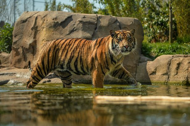 Chester Zoo live stream is giving an online tour of its most popular animals