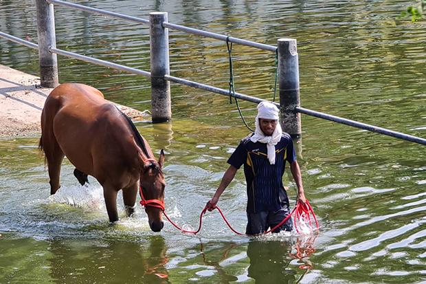 Deadly virus kills 42 racehorses in Korat
