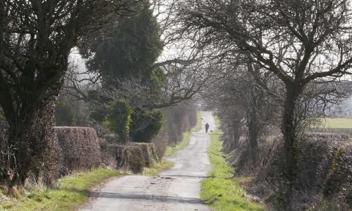 Country diary: there's solace to be found walking down a rural lane