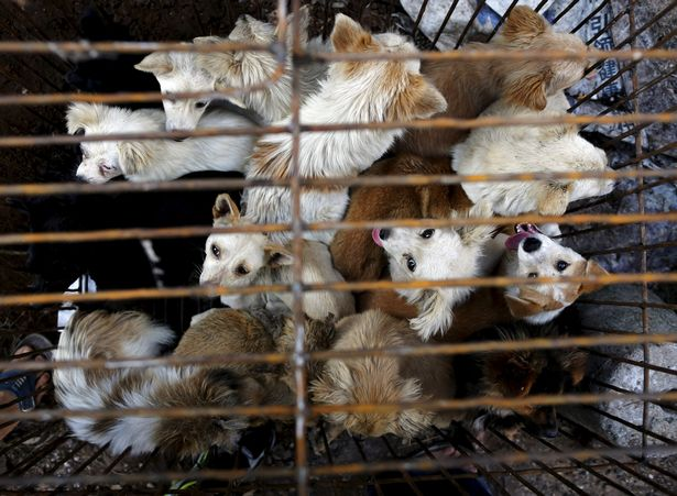 Chinese city bans dog and cat meat trade amid coronavirus crisis