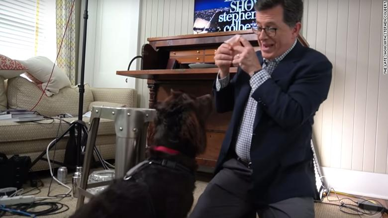Stephen Colbert's dog Benny is the new star of the 'Late Show'