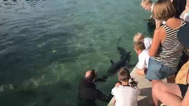 Hundreds ignore lockdown laws and flock to beach to see great white shark