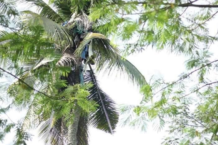 男子在树上住了3年,知道原因后,让人不淡定了!