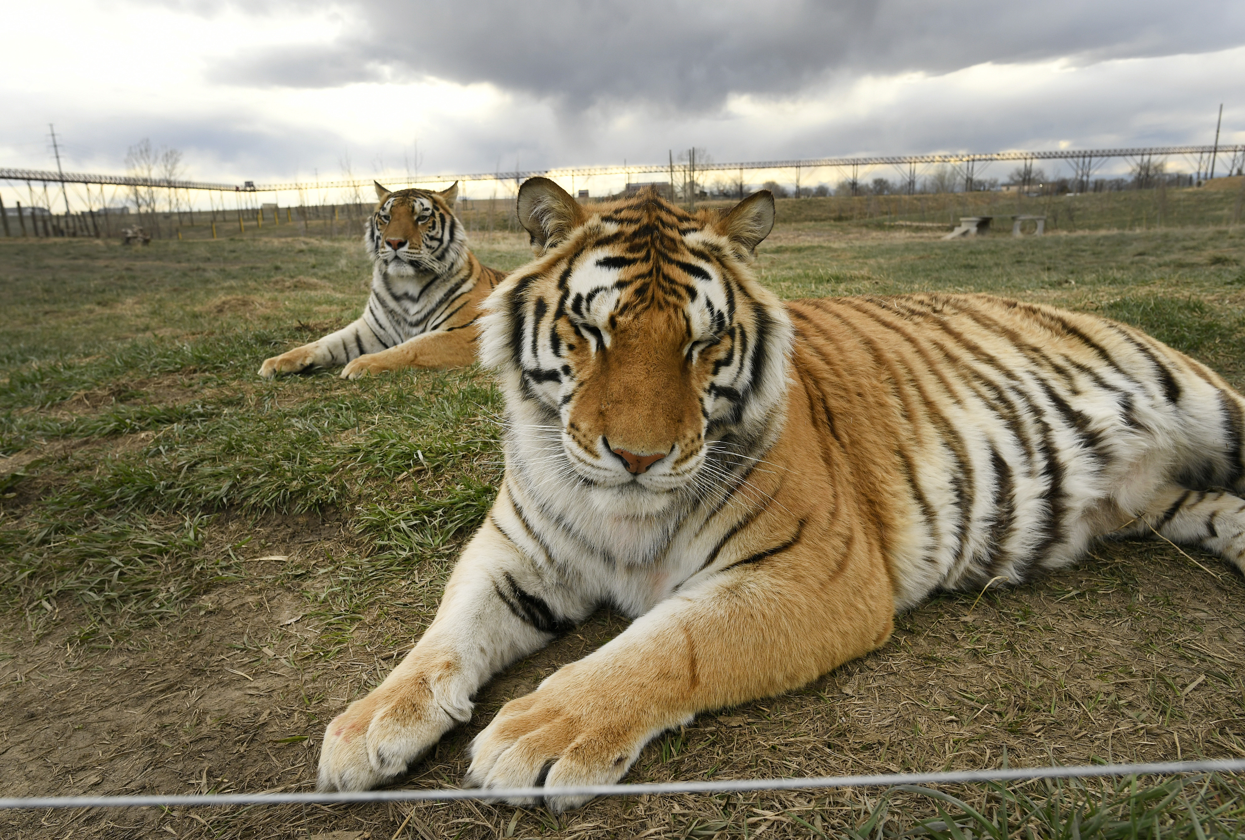 Tiger King is less fun when you actually think about the victims