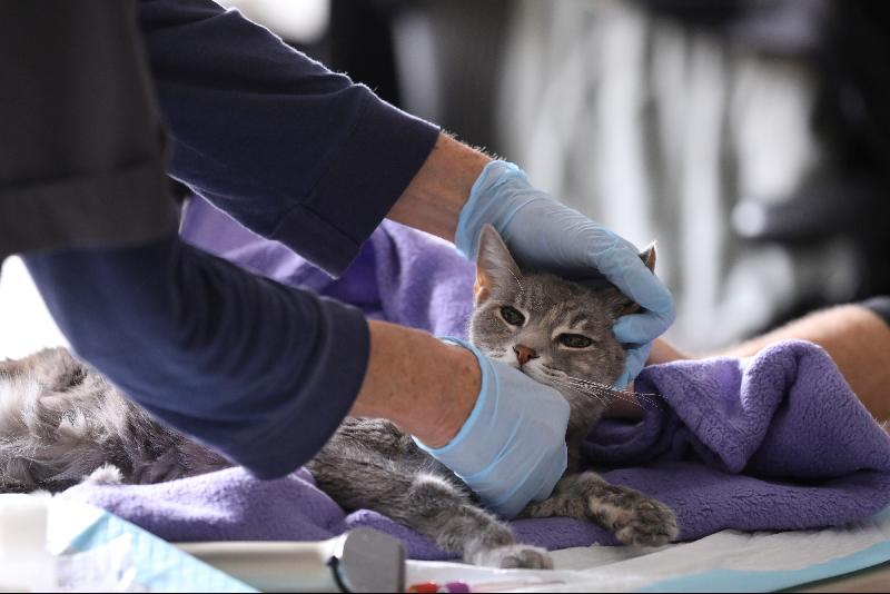 研究显示猫比狗更易感染冠病