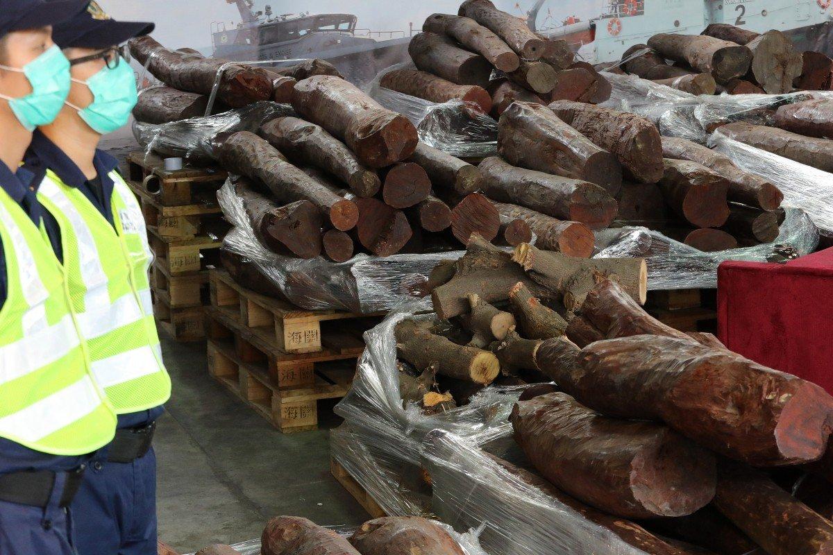 Hong Kong customs officers seize HK$5.5 million worth of endangered red sandalwood bound for mainland China