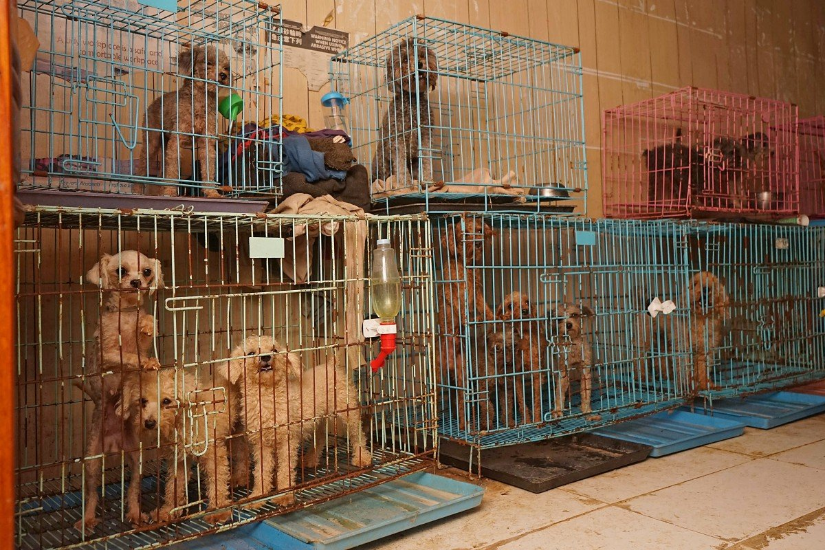 Hong Kong woman jailed for seven weeks for abusing dogs in Yuen Long breeding farm