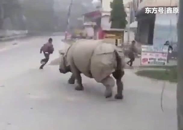 尼泊尔犀牛在公园外游荡,吓到路人掉头就跑!