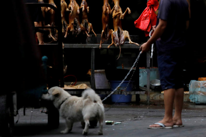 China considers ending dog meat consumption