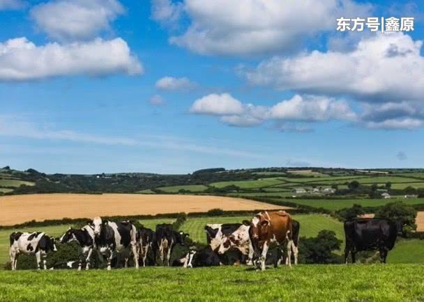 因市场需求量大降,美农民丢掉大批滞销牛奶、蔬菜!