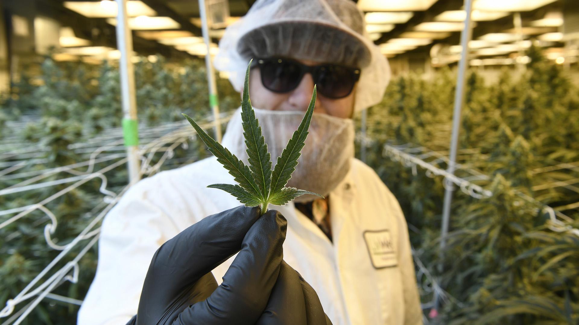 Virginia Governor Decriminalizes Marijuana