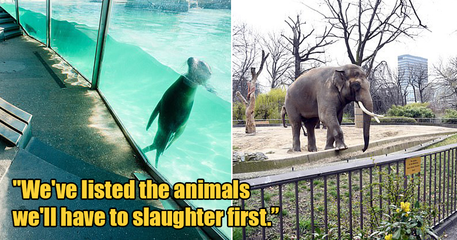 German Zoos Might Have to Feed Their Animals to Each Other As a Last Resort to Keep Zoo Alive