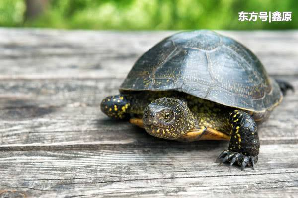 太想出门放风!罗马女不顾禁令牵宠物龟一起上街遛弯,被逮捕!