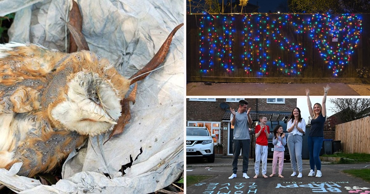 Animal charities beg people not to use sky lanterns during clap for carers