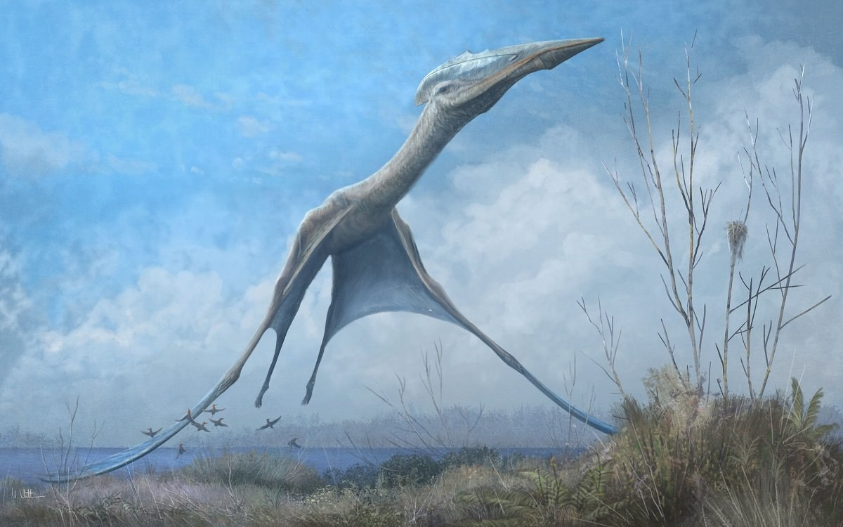 Ancient winged reptiles could be inspiration for new fleet of drones