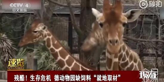 """德国一动物园打算""""用动物喂动物"""",甚至已排好安乐死顺序"""
