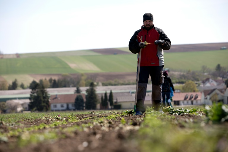 Austrians discover farm work in coronavirus labour crunch