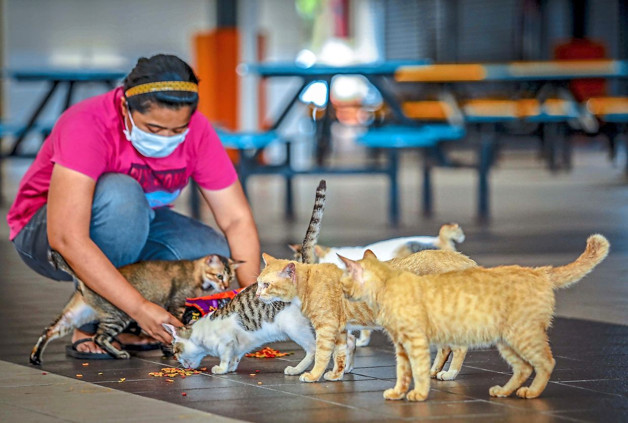 Animal rescuers, feeders also heroes
