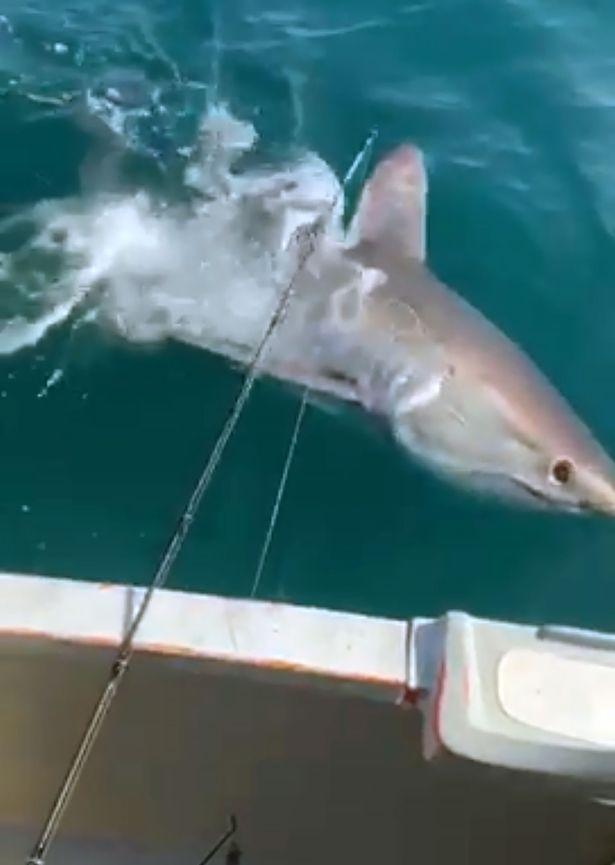 British fishermen reeling as huge shark circles them 'in scene like Jaws'