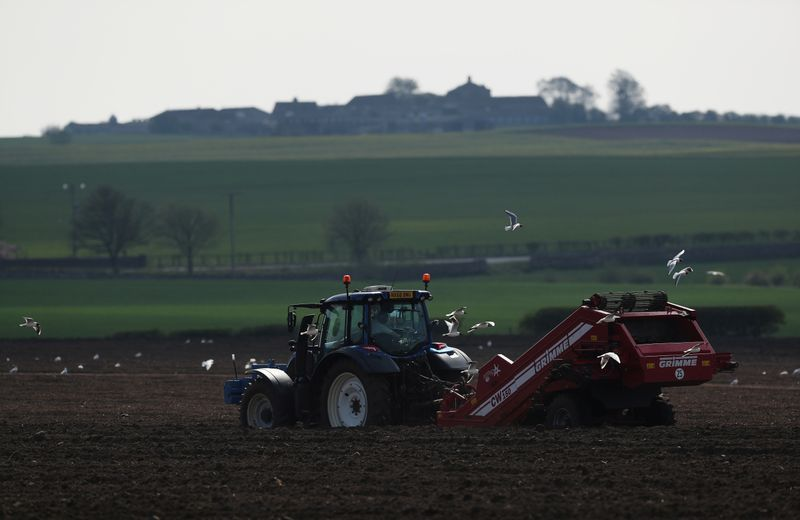 Thousands of british workers will need to gather the harvest
