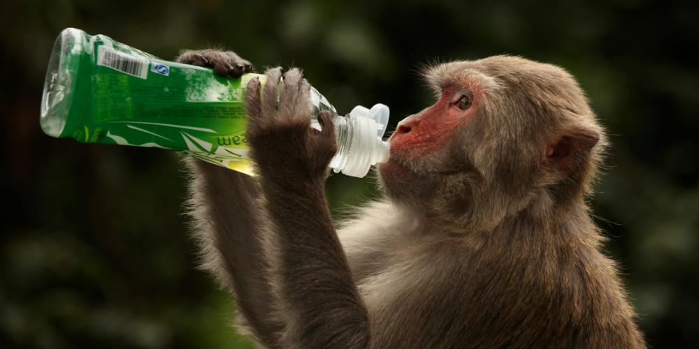 牛津大学研制出新冠肺炎疫苗!实验猴子产生免疫!人体临床试验后最快9月上市!