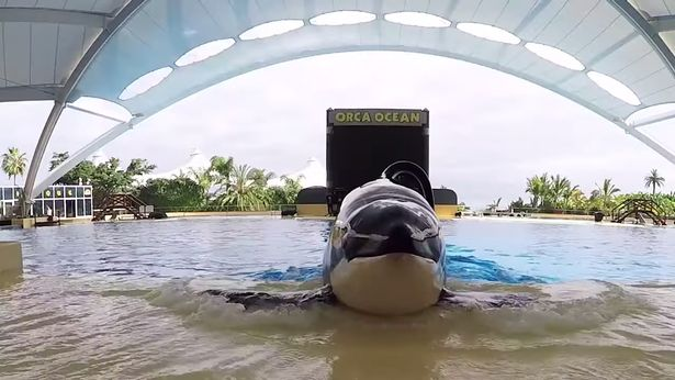 Trainer's horrific death as SeaWorld killer whale 'tore his organs and bit his body'