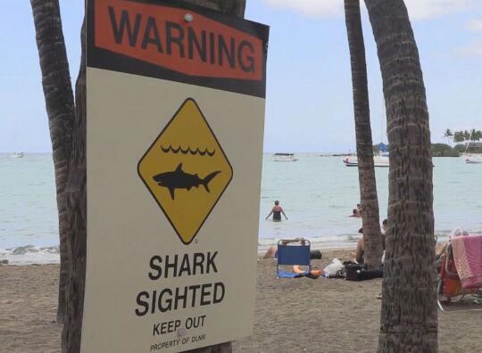 美加州26岁男子冲浪时遭鲨鱼袭击,当场身亡
