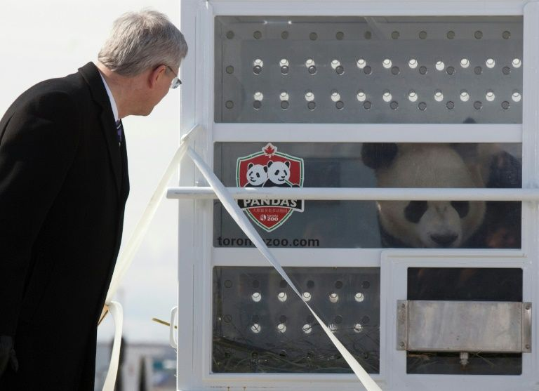 Canada zoo to send pandas home after bamboo shortage