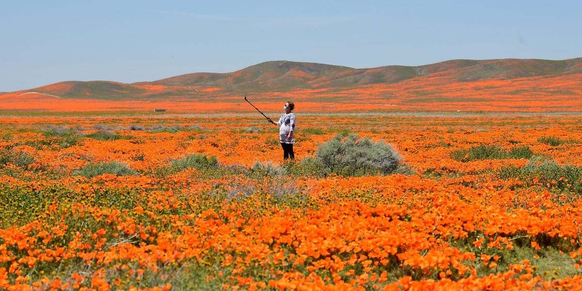 10 stunning photos of Southern California's poppies bursting into bloom after months of drought