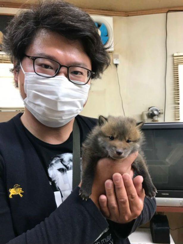 Man takes in 'puppy' he found on road - but people are quick to point out it's not a dog