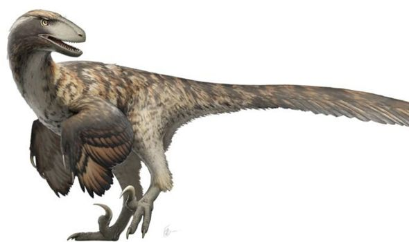 Jurassic Park was WRONG: Raptors did not hunt in packs, scientists find