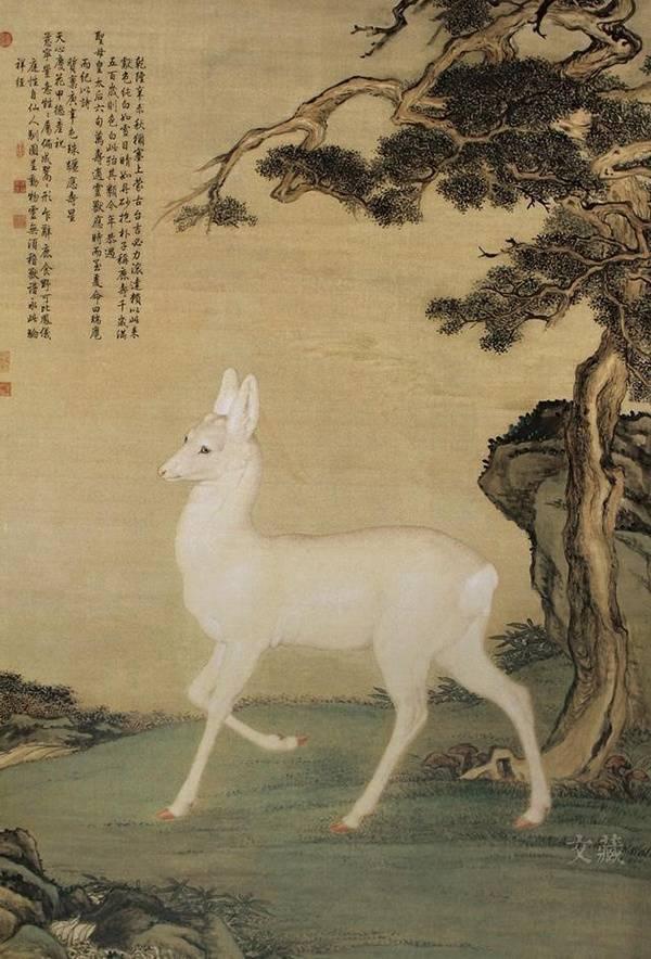 """中国惊现""""古代神兽""""白狍⚡被拍到现身密林觅食!专家: 古代被视为「国宝」!"""