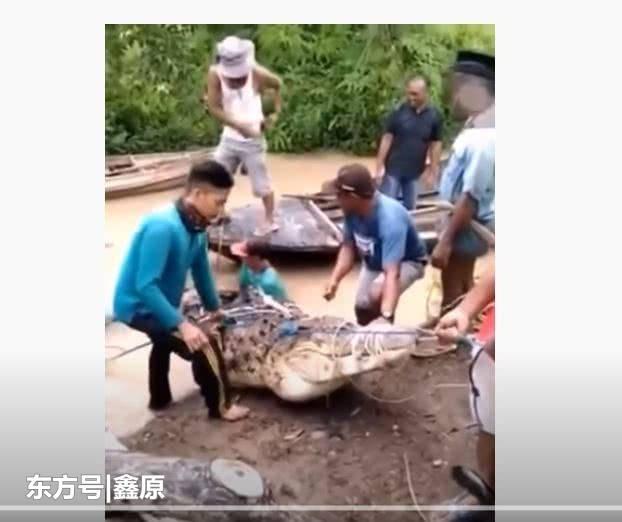 印尼17岁少女被巨鳄拖入河中死亡身上竟毫无咬痕,原因曝光!