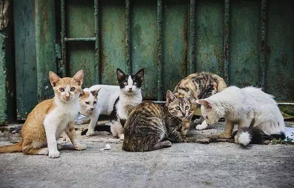 现在买肉都要小心看了!失业男子杀害流浪猫伪装成兔肉售卖!