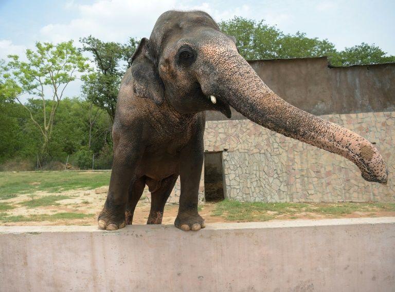 Cher tweets Joy as Pakistan agrees to free lonely elephant kaavan